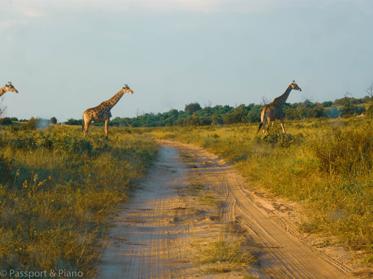 How to plan an excellent Self drive safari- Botswana